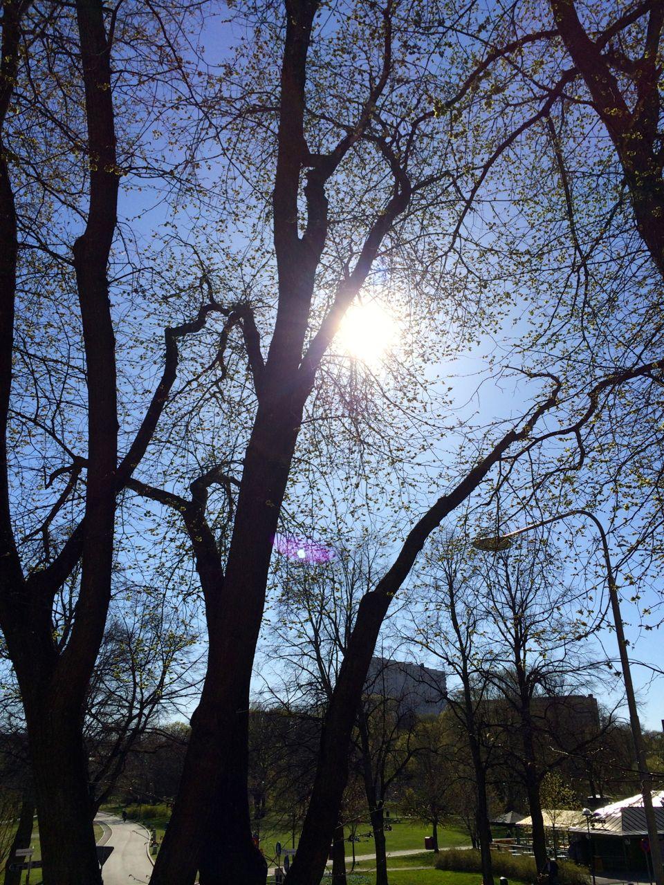 Rålis i sol